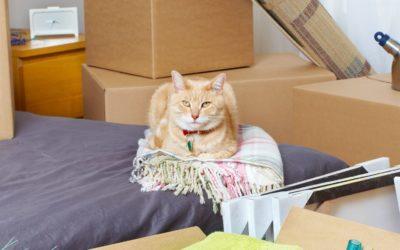 5 choses que les déménageurs ne devraient PAS prendre